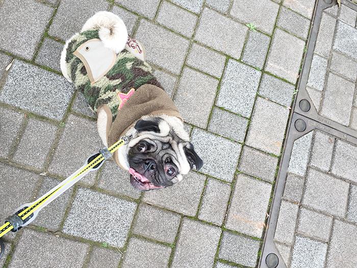 今日は暖かかったのでたくさん散歩してきました!