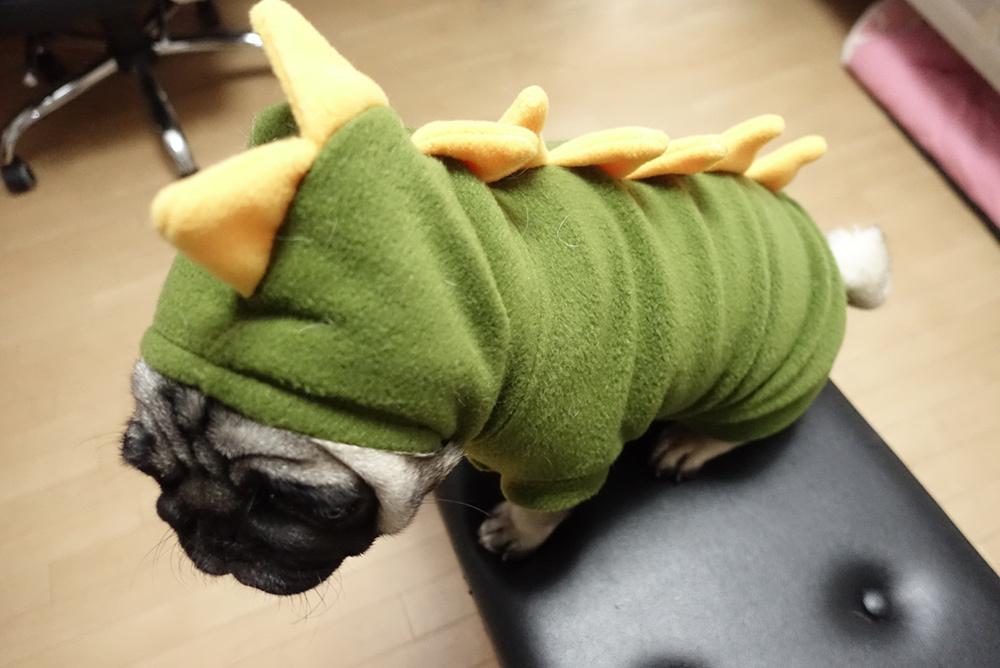 きぐるみ!?風な犬服をパグに着せてみました~!