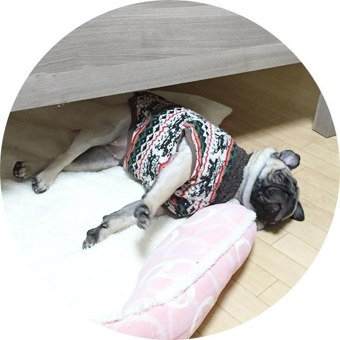 伸びをしながら寝るパグ
