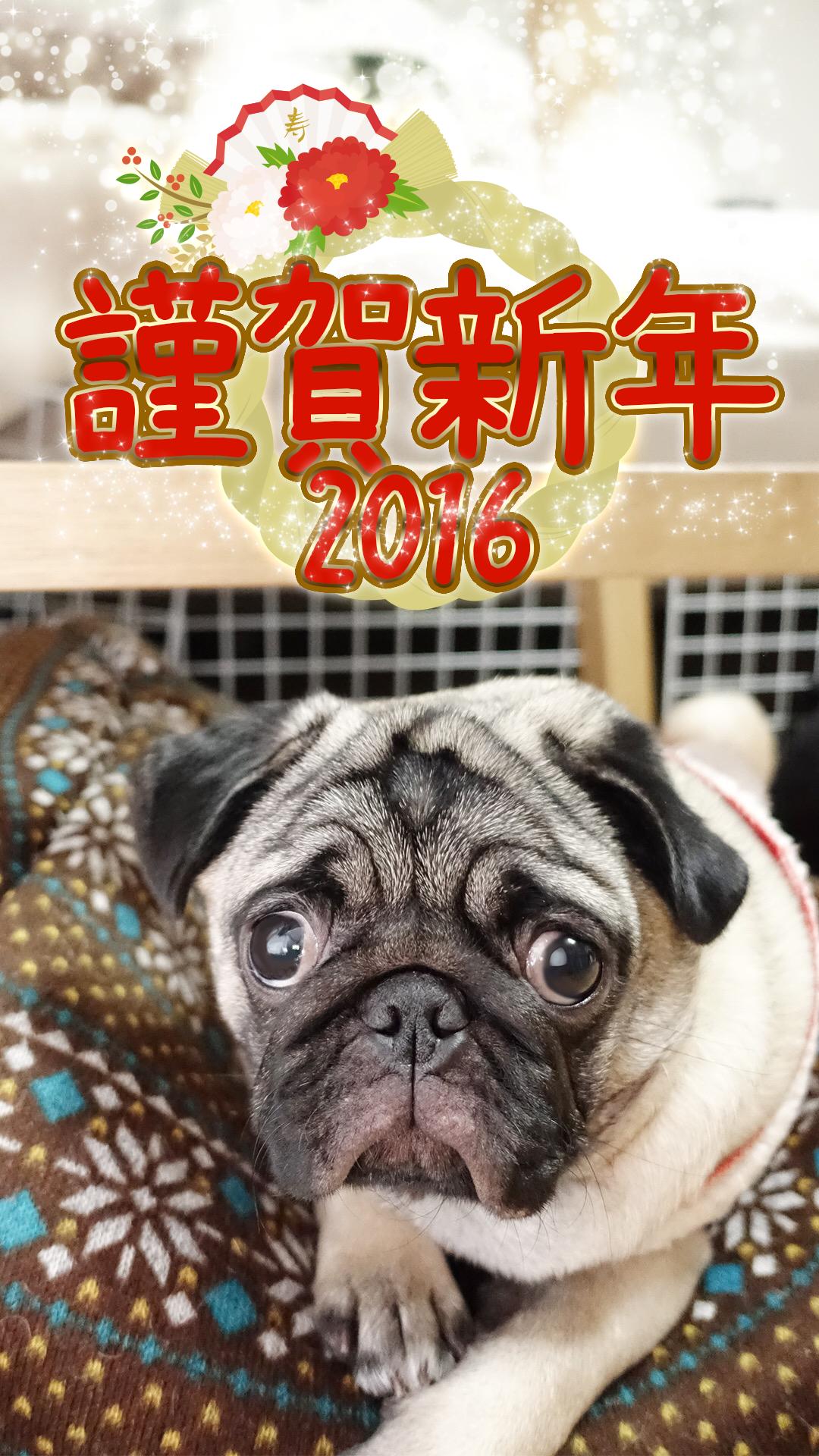 2016 あけましておめでとうございます!!