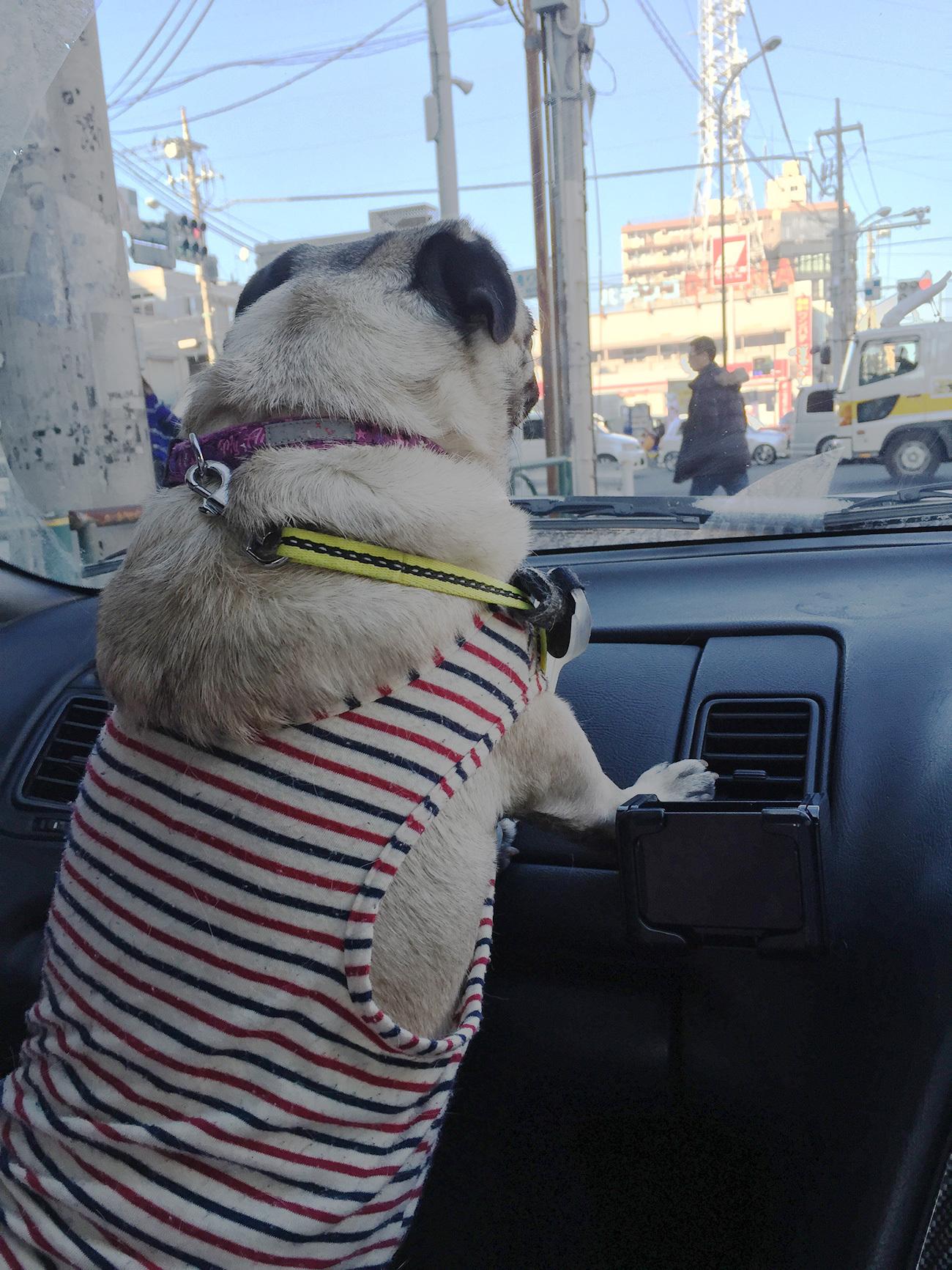 ハナと一緒にドライブ!都内編①♪